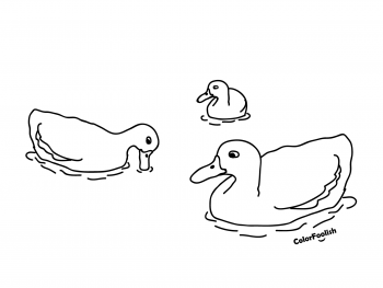 Coloring page of ducks in water