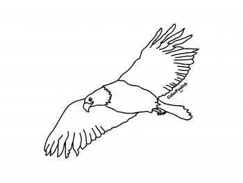 Coloring page of a flying eagle