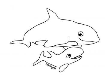 Coloring page of an orca with a young baby orca