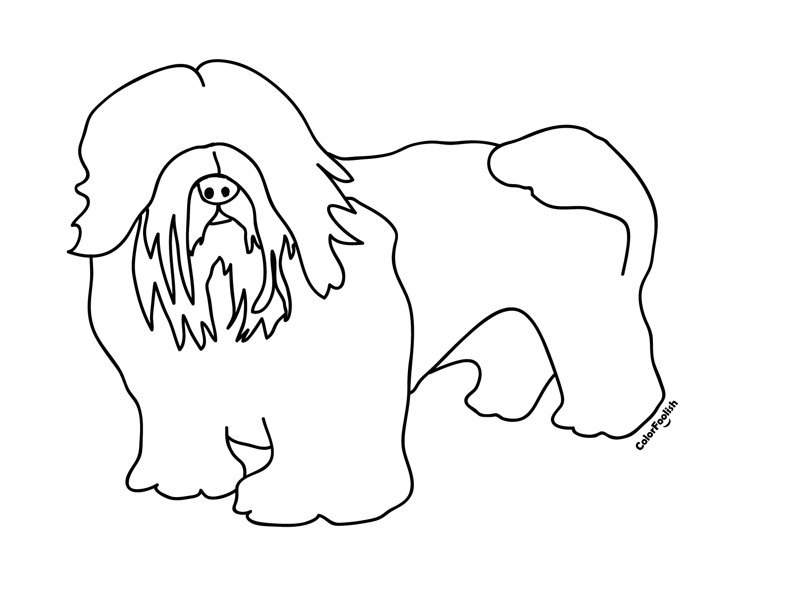Coloring page of a puli dog